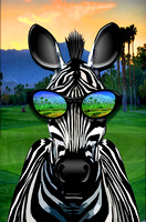 Zebra Palm Springs NEW COMP2